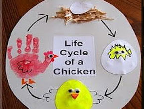 Young Friends Corner - Life Cycle of Chicken